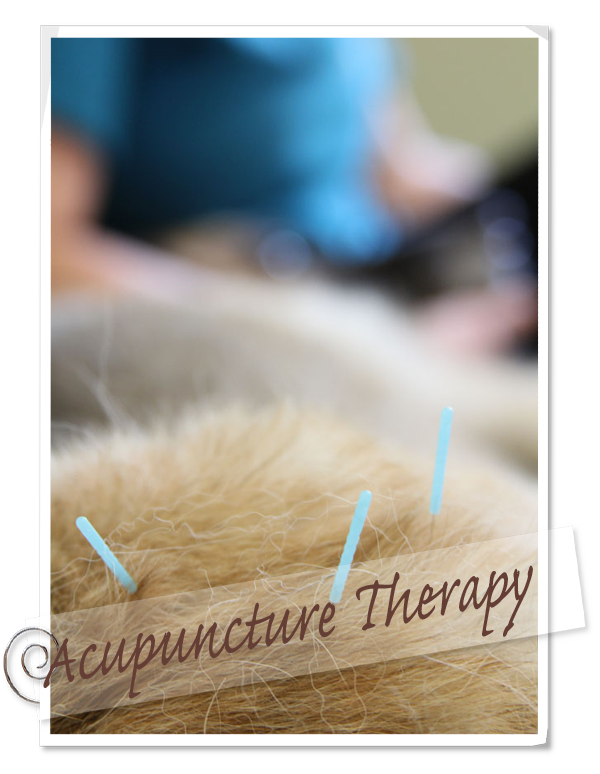 Acupuncture Therapy for pets