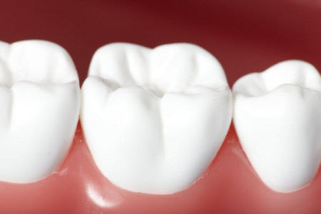 White healthy perfect teeth plastic model