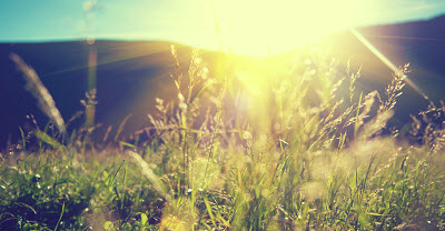 beautiful nature landscape with sunflare